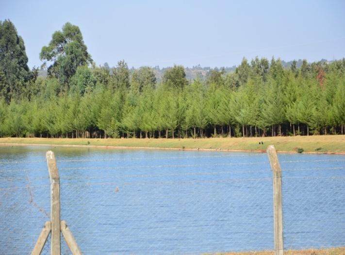 Tree nursery at ELDOWAS Sewerage Treatment Plant in Kipkenyo          Established forest at ELDOWAS Sewerage Treatment Plant in Kipkenyo