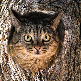 Owl cat by Paul Drajem - Animals Other ( photoshop art, cat, manipulations, tree, bark, artistic, trees, feline, owls,  )