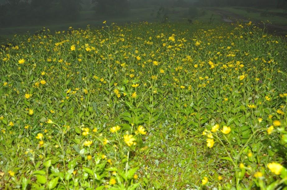 Sonaki Flower bed