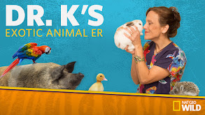 Dr. K's Exotic Animal ER thumbnail