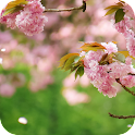 Spring Flowers Live Wallpaper icon