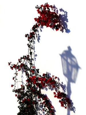 solo un'ombra di alber52