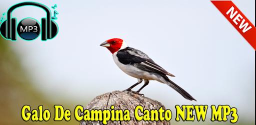 BAIXAR DE GALO CD CAMPINA DE CANTO