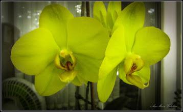 Photo: Orhidee - din Turda, Calea Victoriei, Nr.5, ap. 8 - 2019.05.26