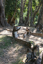 Photo: monkeys by the temple-we gave them some water
