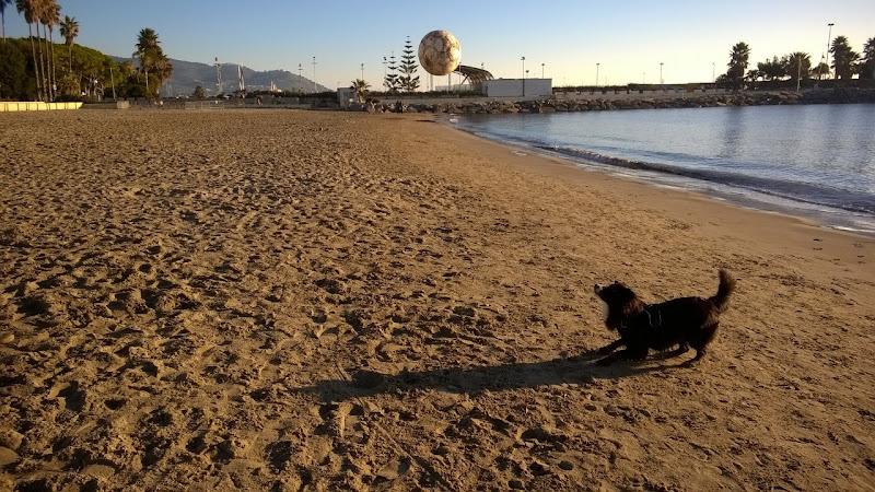 Il mio hobby....il mio cane di Sharon_Sarubbi