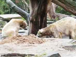 Photo: Knut stattet Gianna einen Besuch ab ;-)