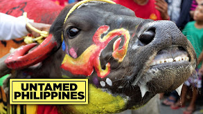 Untamed Philippines thumbnail