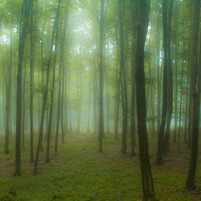 Foggy Forest by Ioan G Hiliuta - Landscapes Forests ( foggy, tree, fog, green, trees, summer, forest )