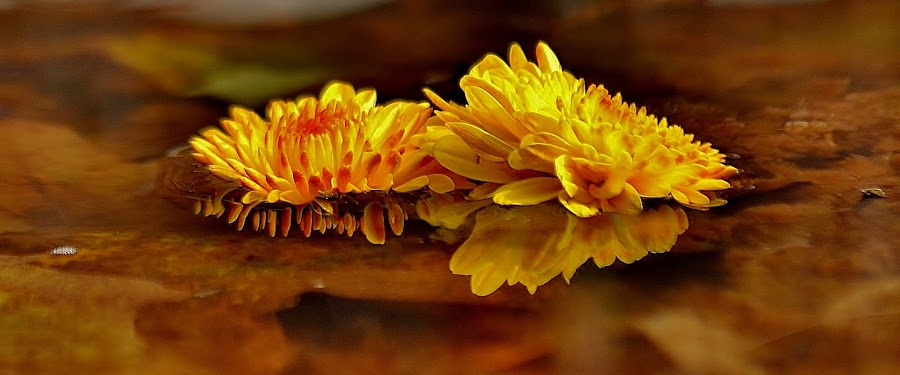 CANDLELIT by Photos are Magical - Nature Up Close Flowers - 2011-2013