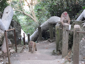 Photo: Monkeys chasing us
