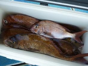 Photo: 釣果です! タムラさん、真鯛9匹でした。