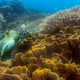 by Jim Cunningham - Animals Sea Creatures