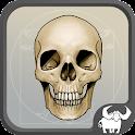 aBones - Skelett Knochen