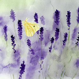 Lavender fields  by Anika McFarland - Painting All Painting ( watercolor, lavender field, butterfly, lavender, flower )