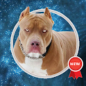 Pitbull Wallpapers icon