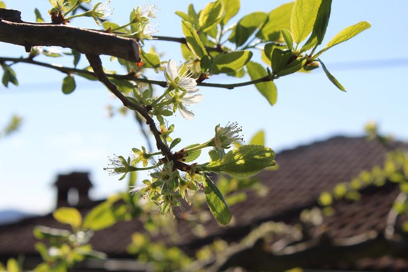 Perletto e la sua flora di betz