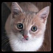 Cat Sound & Ringtone