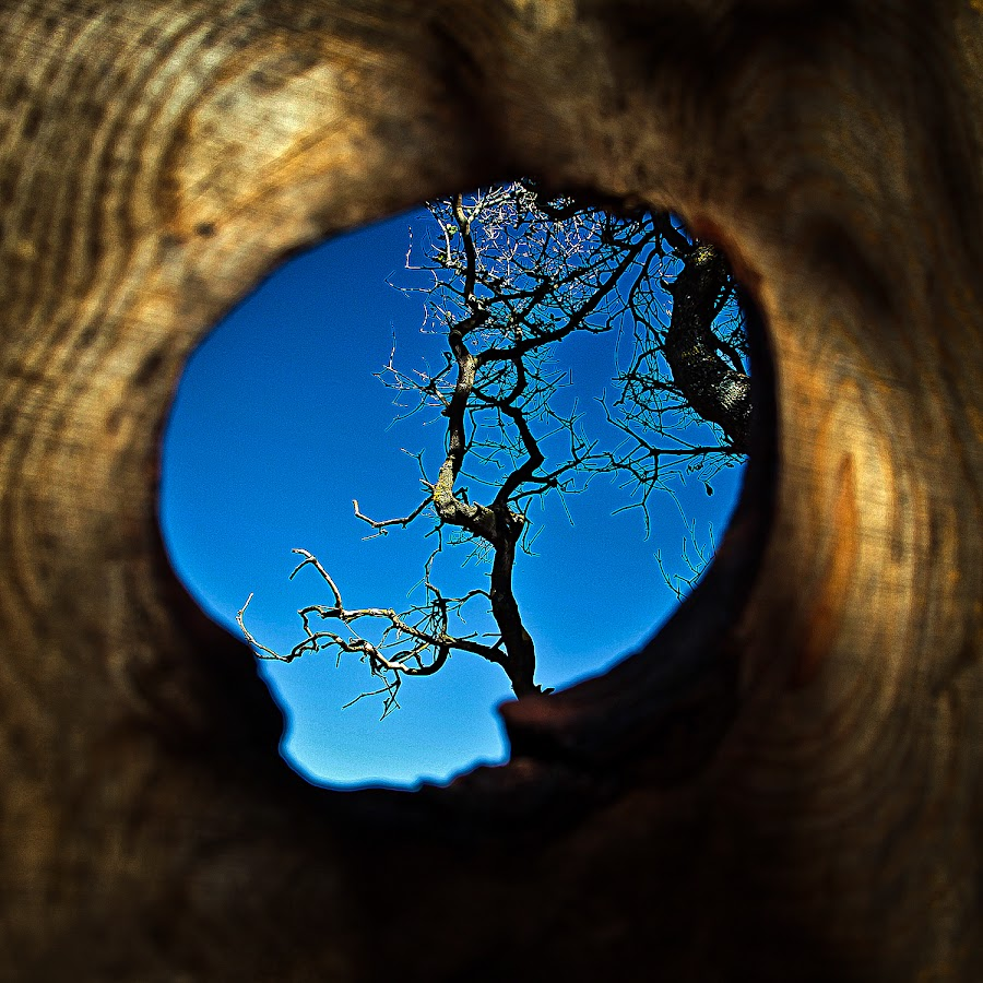 tree to wood  by Magdalena Wysoczanska - Nature Up Close Trees & Bushes ( sky, life, tree, nature, wood, blue, fresh )