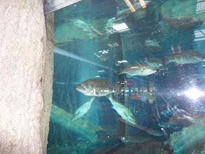 Photo: The fish tank at Bass Pro Shops