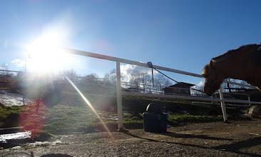 Photo: 'Fuzzy-Lichtspiele' mit Pferd