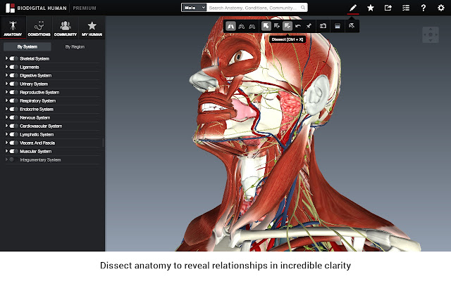 Human 30 chrome web store 3d atlas of human anatomy health conditions comprehensive 3d interactive ccuart Gallery