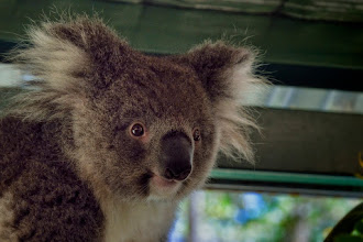 Photo: Caversham Wildlife Park, Perth, Australien