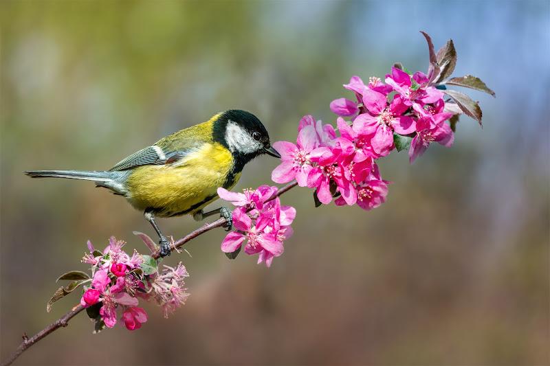 La natura si veste di colori e profumi di Sara Jazbar