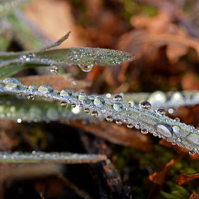 by Camilla Nilhammer - Nature Up Close Leaves & Grasses