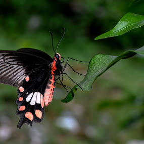 Beauty by Kamal Bhattacharjee - Animals Insects & Spiders