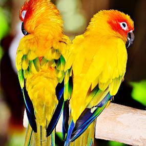 by Banggi Cua - Animals Birds