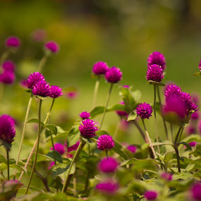 Purply affair by Shashank Ramesh - Nature Up Close Flowers - 2011-2013 ( macro, nature, purple, green, thorn, leaf, flowers )