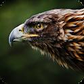 Eagle Live Wallpaper icon