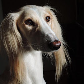 by Clare Draper - Animals - Dogs Portraits