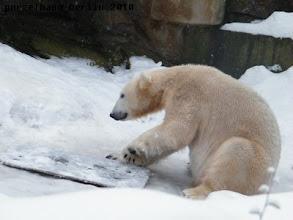 Photo: Gianna laesst sich nicht blicken - beschaeftigt sich Knut eben mit dem Brett ;-)