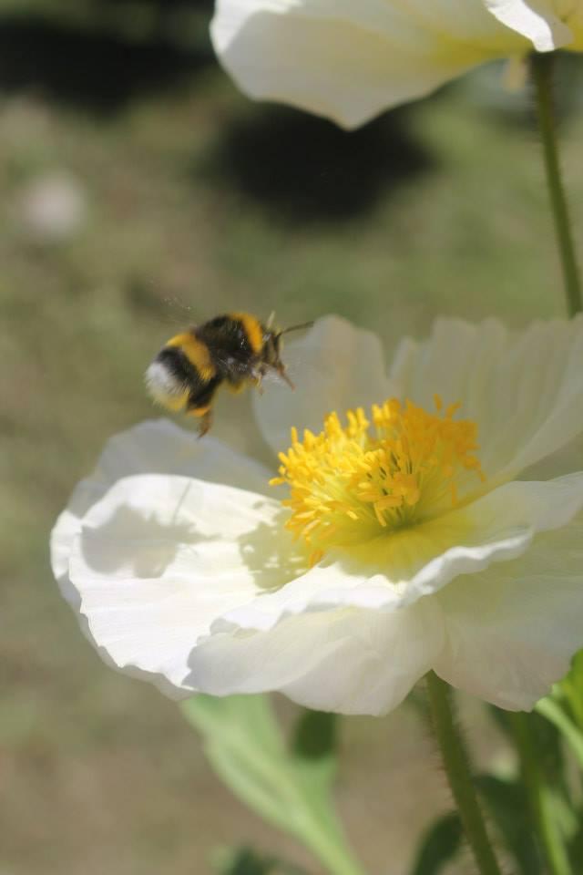 primavera di fabrizio_basta