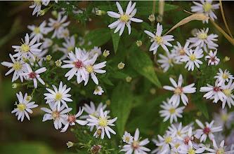 Photo: Flowers 1