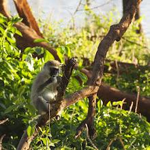 Photo: Nakuru-järven rannalla ...