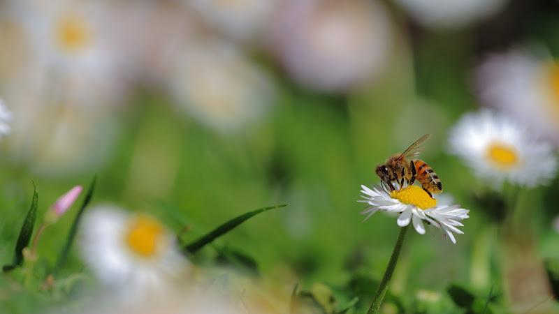 Aprile in giardino di Nocentini M.