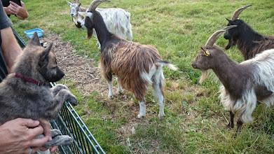Photo: socialiseren op de kinderboerderij (Maggy)