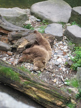 Photo: Another of the... ahem... ferocious brown bears guarding Krumlov castle