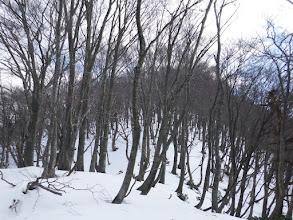 桜谷山へ向う