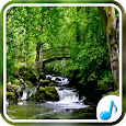 Nature Sounds For Relax and Sleep