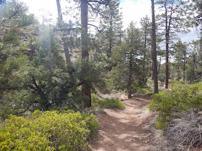 Photo: This is the side of Bryce that you don't see on the postcards: green, vibrant canyon floor communities.