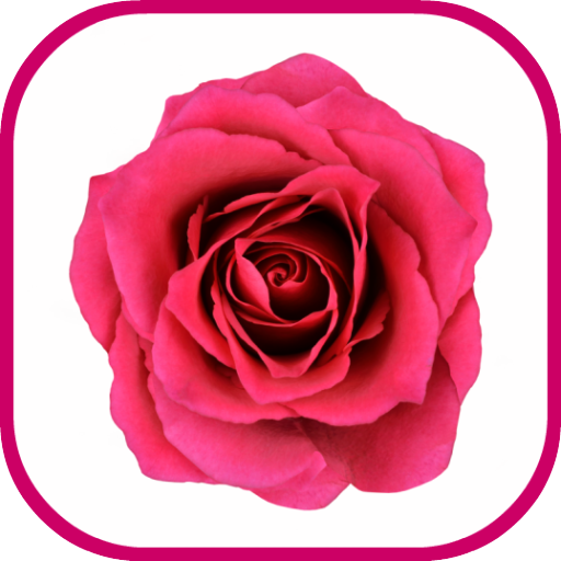 Rose Flowers Jigsaw Puzzle