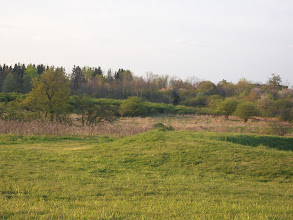 Photo: Garden site before fence and plots