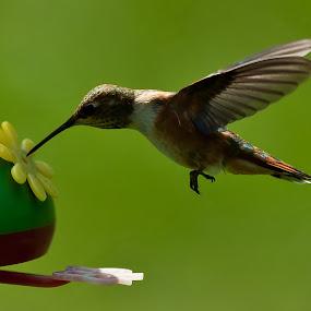 by Muzo Gul - Animals Birds