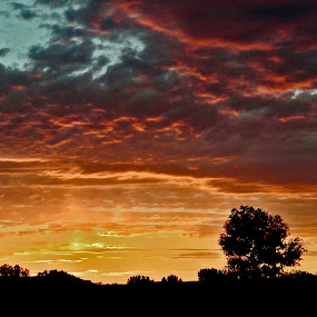 I took this shot by Rose Smith - Landscapes Sunsets & Sunrises ( took, patio, this, i, photo, from, my,  )