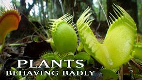 Plants Behaving Badly thumbnail