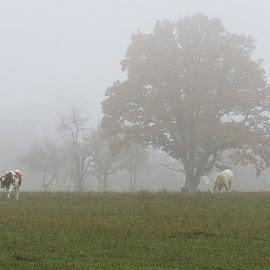 November by Mārīte Ramša - Landscapes Prairies, Meadows & Fields (  )